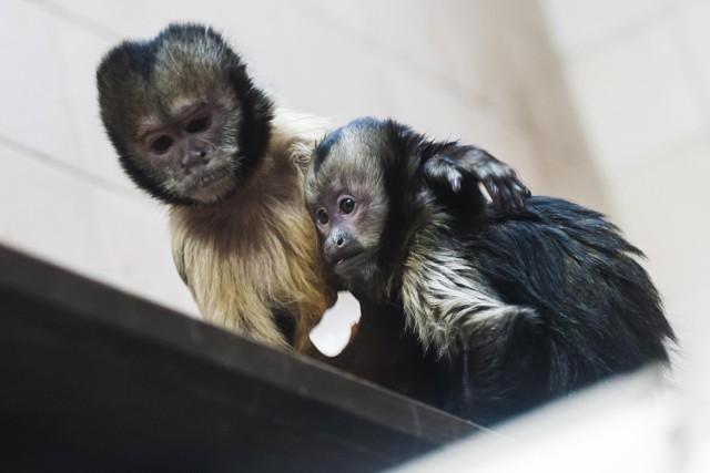 Walentynki w zoo