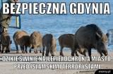 Prima aprilis! Gdynia na dzień żartów. Te memy poprawią Ci humor!
