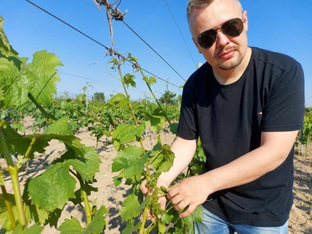 Nie ma wina nad wino... Węgrzyna! Czyli o tym, jak w powiecie międzychodzkim powstała pierwsza winnica na medal (17.06.2021).