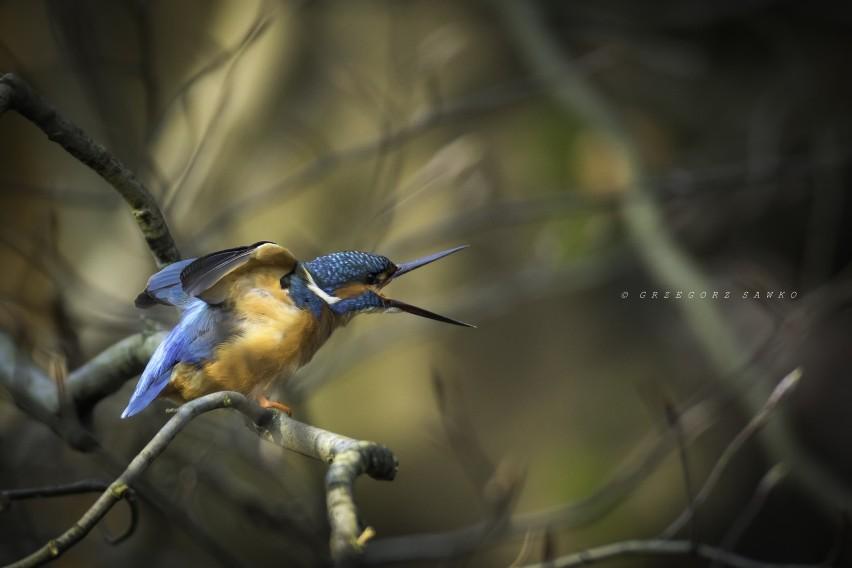 Piękne zdjęcia zwierząt i lokalnej przyrody autorstwa...