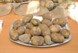 W gminie Giby odbędzie się Święto Ziemniaka. W programie konkursy, gry i zabawy