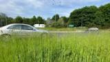 Gorzów ogranicza koszenie trawników. Nowy trend wzbudza mieszane uczucia