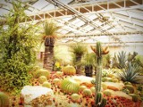 Wielka sprzedaż roślin w Warszawie powraca. Nowe rośliny kupimy od 8 złotych