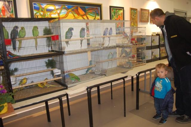 Na wystawie w Solcu pokazano kilkaset ptaków