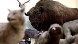 Żubr, szczęki hipopotama i nie tylko. Czym kusi Muzeum Zoologiczne UMCS?