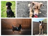 Wiele psów ze schroniska w Poznaniu szuka nowego domu! Zobacz, w jaki sposób wygląda adopcja w czasie epidemii