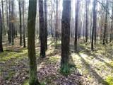 Leszno. Nadleśnictwo Karczma Borowa zaprasza na nocowanie w lesie [ZDJĘCIA]