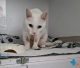 Wybrała wakacje zamiast kota. Weterynarze uratowali zwierzaka i znaleźli mu nowy dom