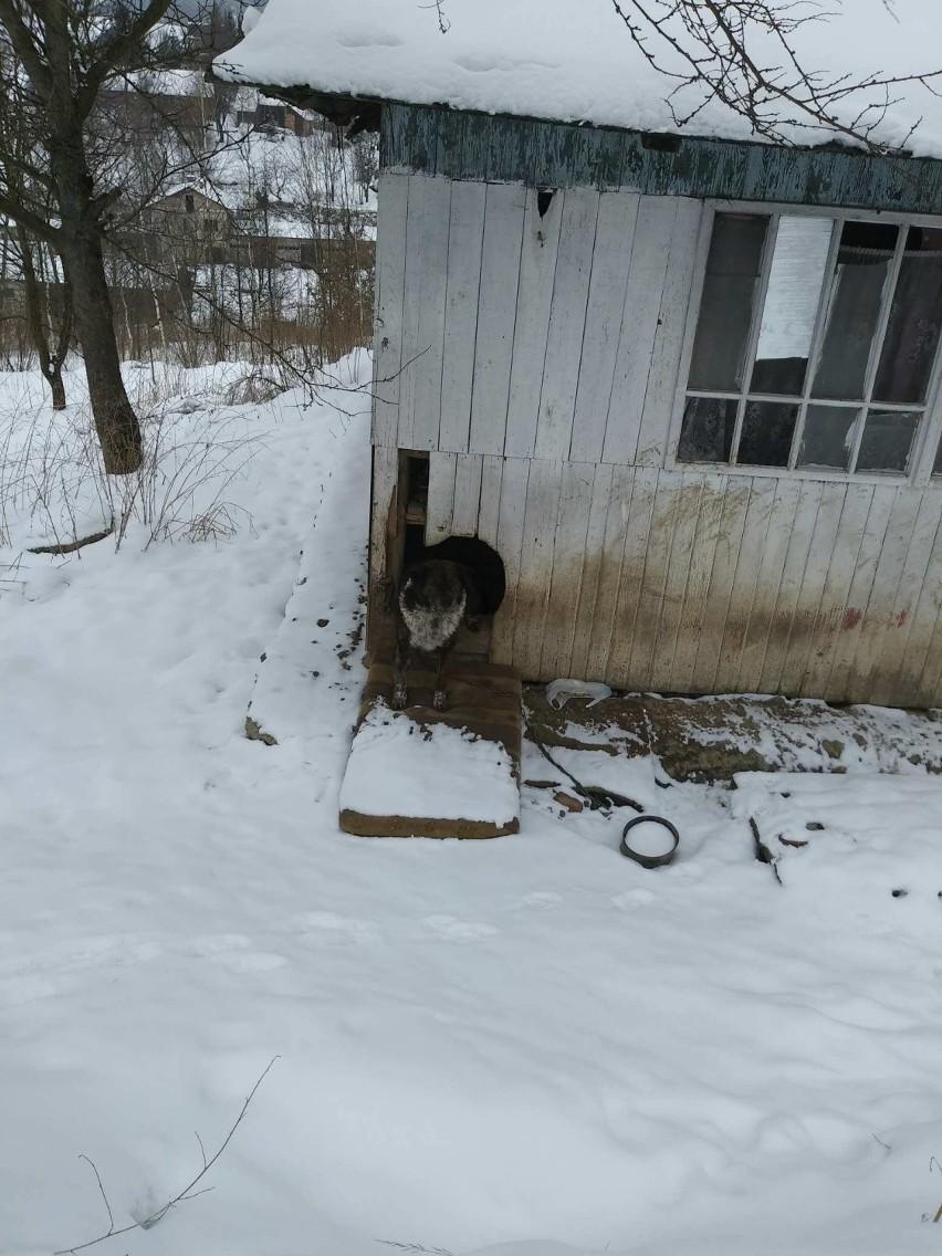 Właściciele zmarli dokarmiali go sąsiedzi zwierzęciu