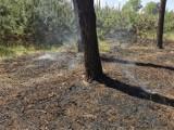 Dwa nocne pożary leśne przy ul. Mahle w Krotoszynie [ZDJĘCIA]