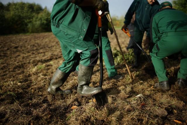 Ubiegłoroczna akcja sadzenia drzew
