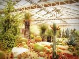 Wielka Sprzedaż Roślin w Warszawie powraca w kwietniu. Nowe rośliny kupimy od 10 złotych