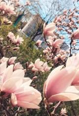Wiosna w obiektywie naszych czytelników. Mamy dużo zdjęć!