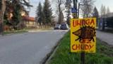 """Polanica-Zdrój chce ratować jeże. Miasto bierze udział w akcji """"Uwaga kierowcy. Idzie jeż"""""""