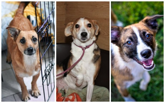 Zobacz psy do adopcji w Aleksandrowie Kujawskim>>>
