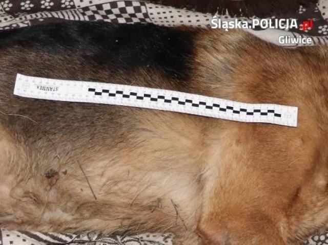 Kłusownik założył wnyki na nieużytkach, gdzie okoliczni mieszkańcy spacerują z psami