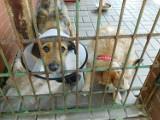 W wałbrzyskim schronisku na dom czekają dziesiątki wspaniałych zwierzaków (ZDJĘCIA)
