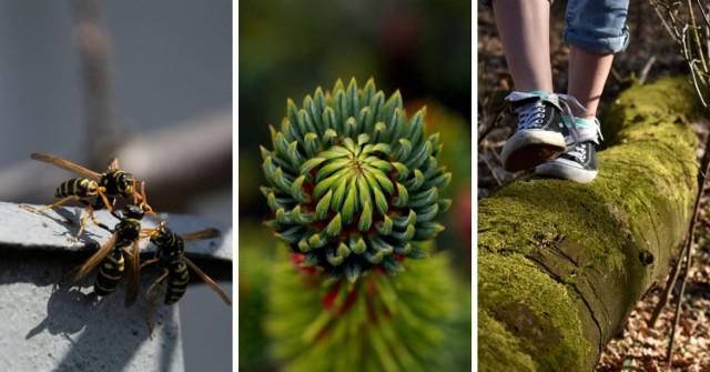 Wiosna na zdjęciach młodych fotografów z Zespołu Szkół Ponadpodstawowych Rydułtów
