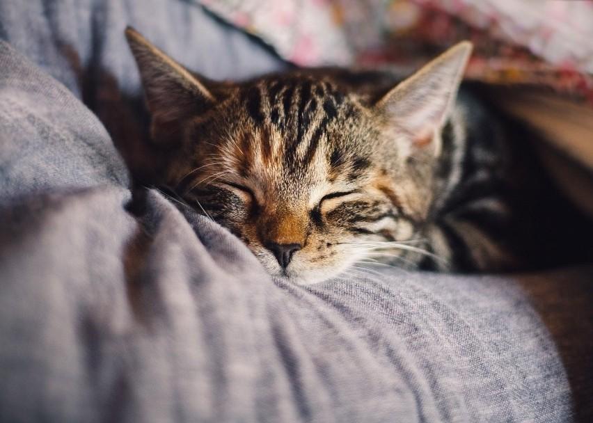 koty - odnotowuje się podobne objawy jak u psów, przy czym...