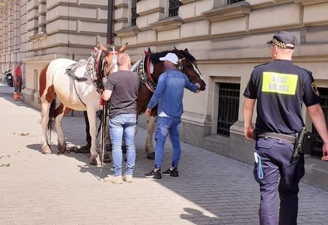 W Krakowie sceny jak z Dzikiego Zachodu