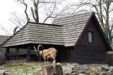 Wybierz się z dziećmi do ZOO w okolicy Legnicy na ostatni weekend wakacji! Sprawdź TOP 10 zoo, zagród i parków zwierząt [ADRESY, CENNIKI]