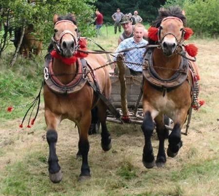 Konie i furmani tak pędzili, że momentami wydawało się, że nie wyrobią zakrętu i wylądują w rowie.