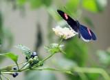 Motyle w zoo w Łodzi. Ogród zoologiczny zaprasza w wakacje do motylarni [ZDJĘCIA]