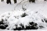 Jaka będzie pogoda we Wrocławiu w ten weekend? Odwilż? Mróz? Śnieg?