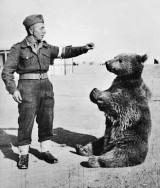 Skwer Niedźwiedzia Wojtka w Warszawie. Najbardziej znany polski miś będzie miał swój plac na Muranowie