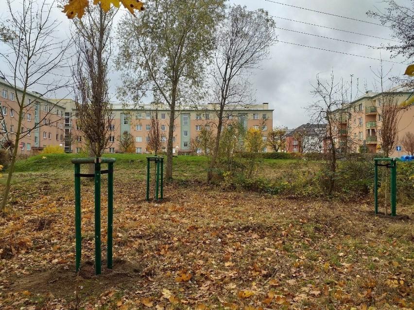 Drzewa posadzone w Szczecinie.