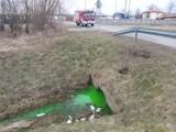 Zielona substancja w potoku przy ul. Towarowej w Jaśle. Wezwano specjalistyczną jednostkę z Nowej Sarzyny [ZDJĘCIA]