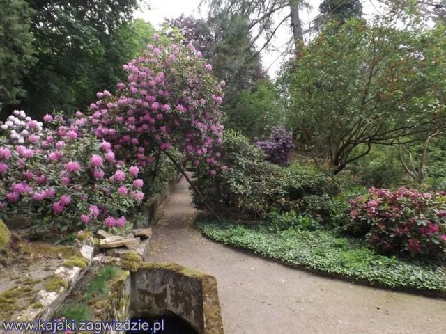 Przepiękny Ogród Botaniczny w Zagwiździu.