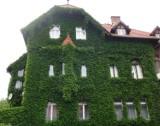 Zagadka - Gdzie jest ten zielony dom?