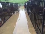 Woda zalała schronisko psów w Borku, 90 zwierząt zostało ewakuowanych [ZDJĘCIA]