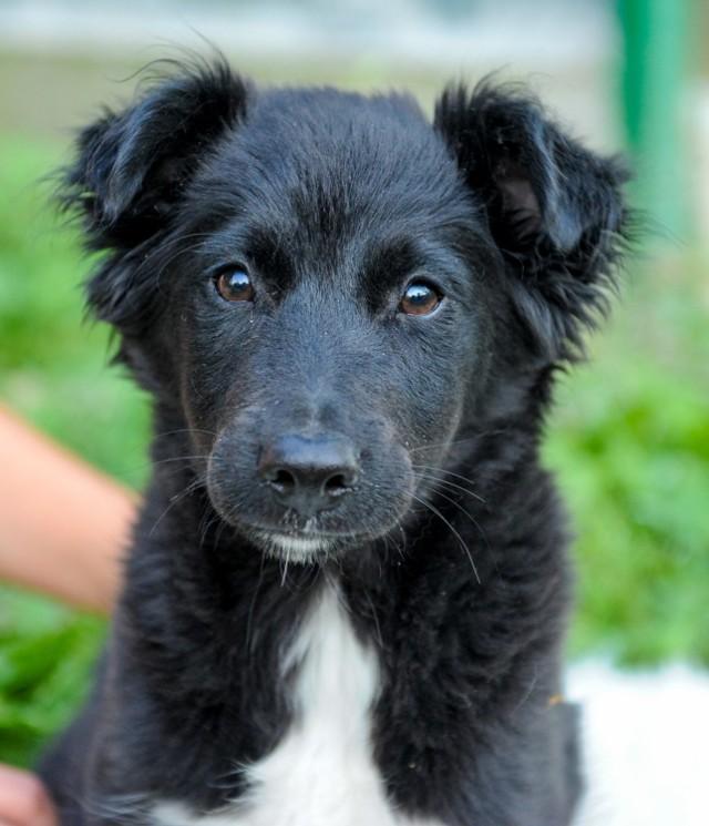W Schronisku dla Bezdomnych Zwierząt w Orzechowcach k. Przemyśla jest blisko 150 czworonogów. Sporo z nich już nigdy nie znajdzie nowego domu. Niektórym spróbujemy pomóc. Zobaczcie pierwsze psiaki, które szukają właściciela.