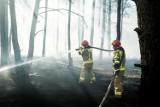 Bydgoszcz. Seria podpaleń w lasach w Fordonie. Aż cztery pożary w 30 minut!