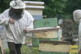 Powiatowe Stowarzyszenie Kół Pszczelarzy w Wągrowcu apeluje do rolników
