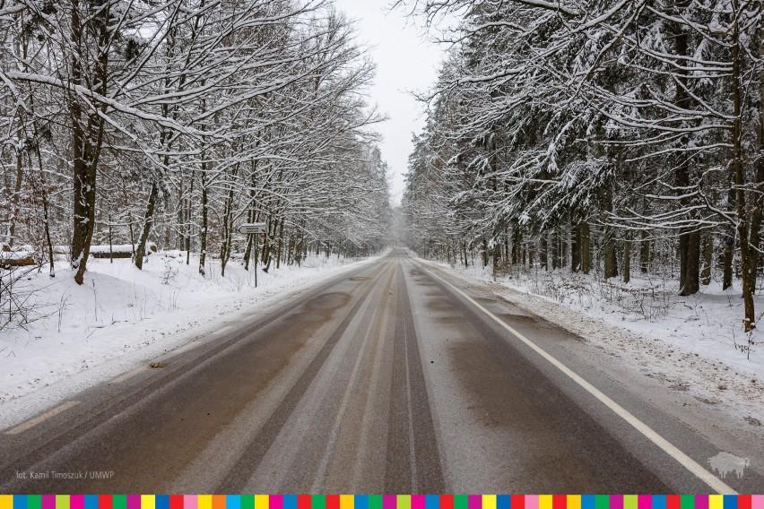 Biała Białowieża. Piękna zima zawitała do podlaskiej krainy żubra (zdjęcia)