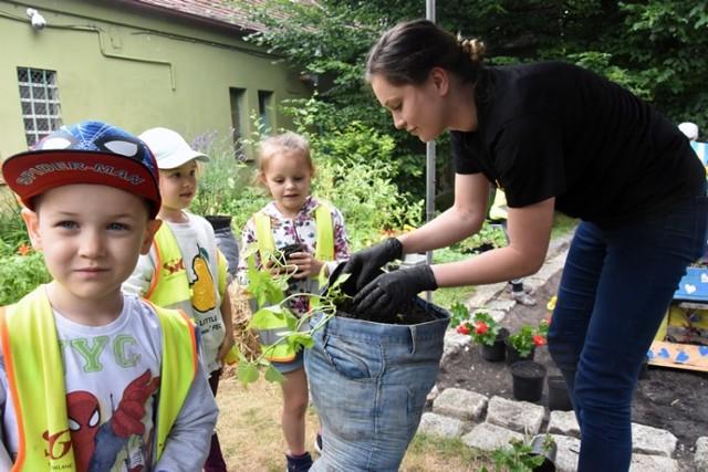 Legnickie przedszkolaki tworzyły mini ogródki w palmiarni