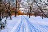 Co robić w Warszawie w zimne dni? Oto 16 rzeczy, które koniecznie musisz sprawdzić [PRZEGLĄD]