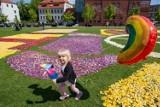Kwiatowe dywany po raz kolejny ozdobiły Wyspę Młyńską w Bydgoszczy [zdjęcia, wideo]