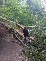Ciche niebezpieczeństwo na szlaku na klif w Orłowie – zagrożenie osunięcia drzewa