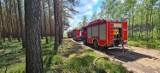 Pożar lasu pod Klempiczem. Trwa akcja gaśnicza