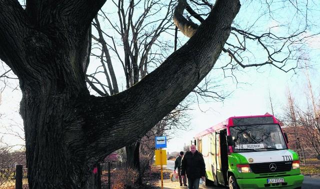 Magistrat twierdzi, że wycinki drzew uda się uniknąć