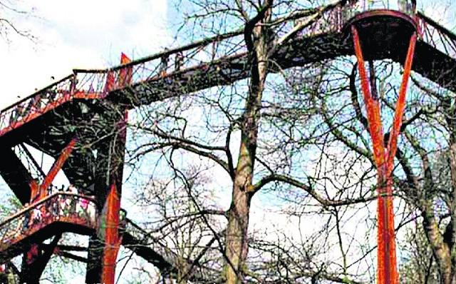 Kładki w koronach drzew z punktami widokowymi. To jeden z pomysłów na zagospodarowanie parku Ludowego