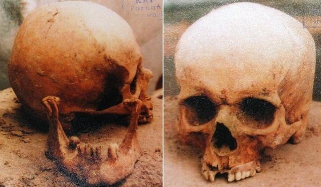 Czaszki wykopane podczas pierwszej ekshumacji w 1991 roku.