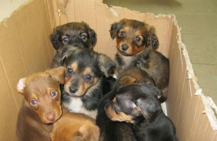 Zamojskie: Seria porzuceń psów. Wyrzucają je z aut na ulice