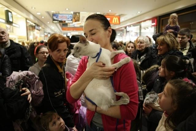 Światowy Dzień Kota ma uwrażliwić ludzi na często trudny koci los i podkreślić znaczenie kotów w życiu człowieka