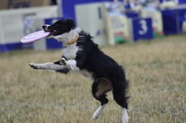 Do 30 kwietnia należy zapłacić podatek za psa