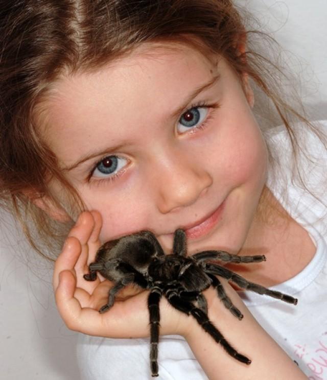 Fascynujący Świat Pająków i Skorpionów  Wystawa w PKiN